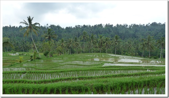 2011-03-18 Bali 070