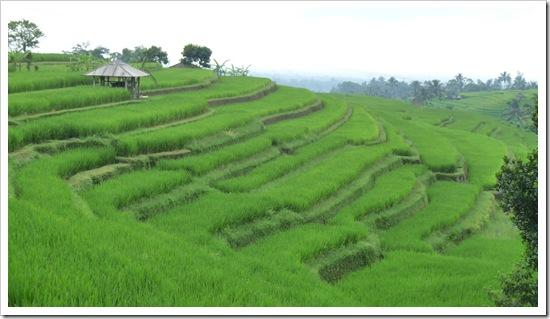 2011-03-18 Bali 114