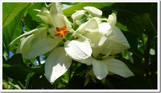 2011-03-20 Bali 025