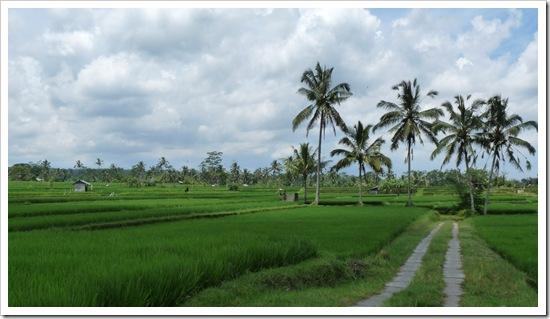 2011-03-20 Bali 041