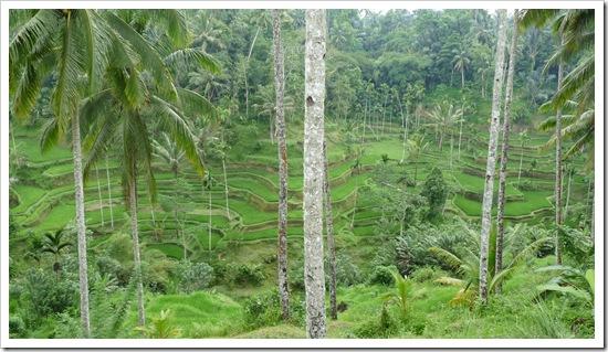 2011-03-20 Bali 090