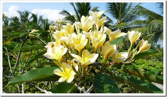 2011-03-22 Bali 006