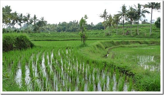 2011-03-22 Bali 043
