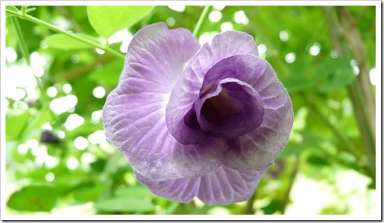 2011-03-22 Bali 053