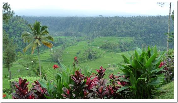 2011-03-22 Bali 082