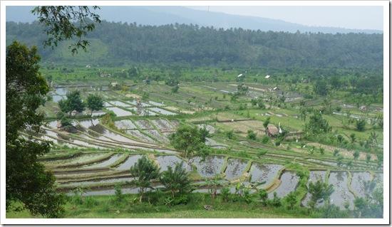 2011-03-22 Bali 104