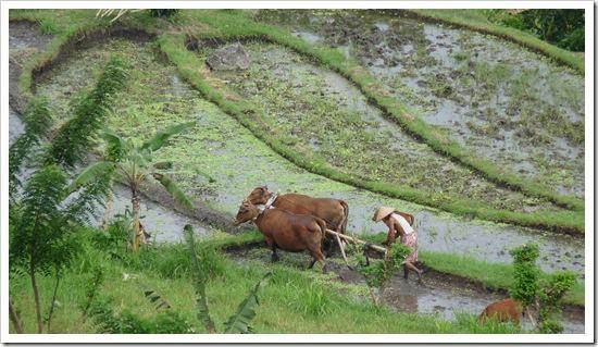 2011-03-22 Bali 117