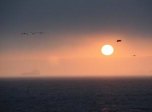 Sunset in Seal Beach - mit 5 (!) Pelikanen
