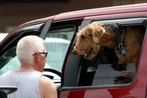 ein typisches Bild - Hund und Herrchen am Pickup