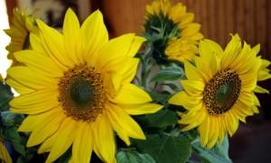 Blumen zum Empfang