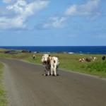 Rapa Nui (13)