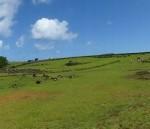 Rapa Nui (39)