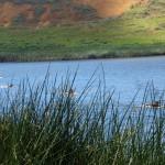 Rapa Nui (63)