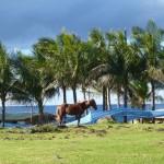 Rapa Nui (81)