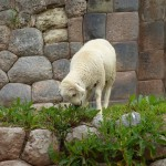 Cusco14