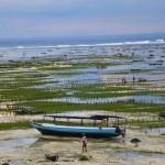 Bali-Kuta20