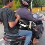 Lombok 14