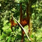 Bukit Jungle16
