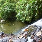 Bukit Jungle18
