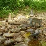 Bukit Jungle26