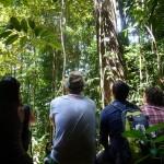 Bukit Jungle28