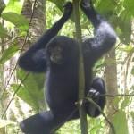 Bukit Jungle31