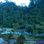 Bukit Lawang4