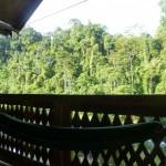 Bukit Lawang5