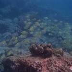 Pulau Weh28
