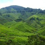 Cameron Highlands22