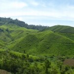 Cameron Highlands23