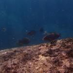 Pulau Tioman10