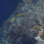 Pulau Tioman20
