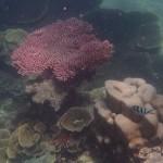 Pulau Tioman28