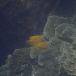 Pulau Tioman29