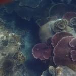 Pulau Tioman30