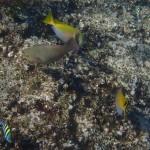 Pulau Tioman8
