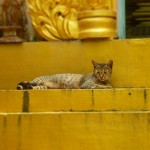 Yangon5