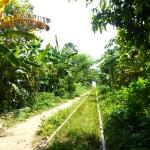 Battambang18