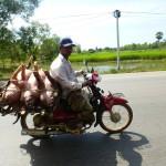 Siem Reap14