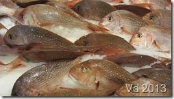 Sydney - Fish Market