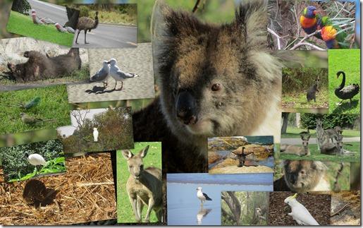 WildlifeAustralien