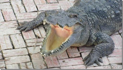 Siem Reap - Krokodil-Farm hinter unserem Hotel