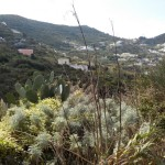 Blick über die Insel Ponza