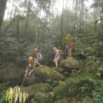 In Hochgeschwindigkeit durch den Urwald