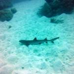Beim morning dive wecken wir diese hübsche kleine Haidame auf