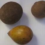 Unbekannte Früchte