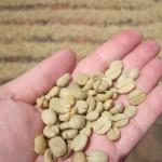 Kaffeebohnen ungeröstet