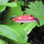 Kolibritränke