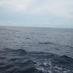 Auf großer Überfahrt…kein Land in Sicht